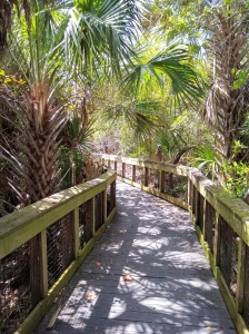 Walking path among palm trees at Jupiter Inlet Lighthouse Outstanding Natural Area