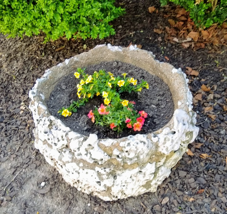 Sponge rock planter with yellow and pink Superbells planted.