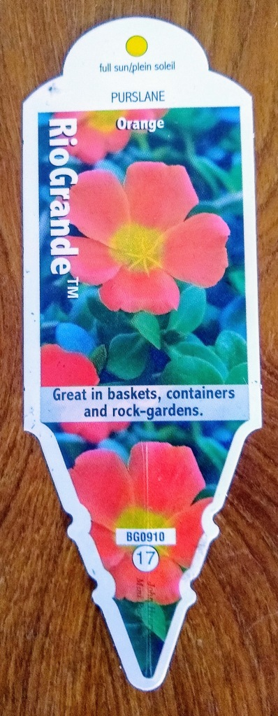 Plant tag for Purslane - Rio Grande.