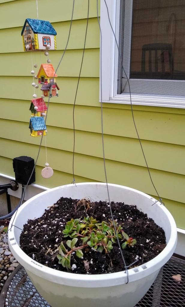 Hanging pot with Purslane - Rio Grande planted.