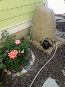 Picture of rain barrel which looks like a large rock by rose bush.