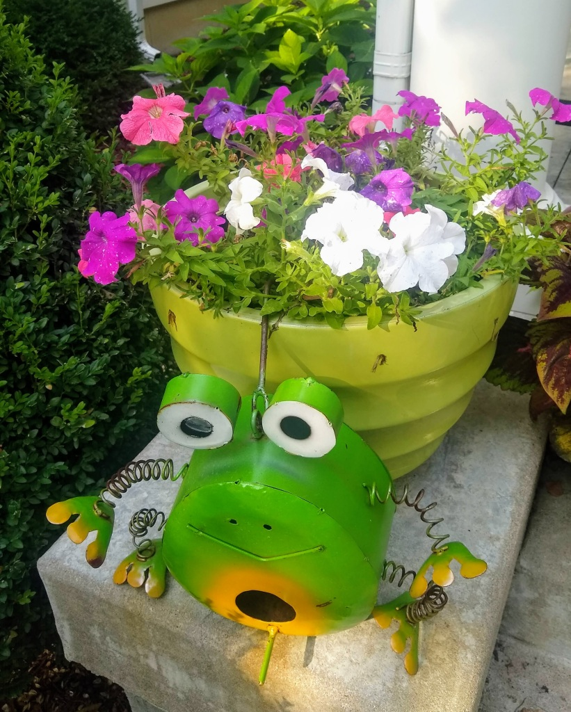 Pot with Petunias growing and metal frog smiling in front.
