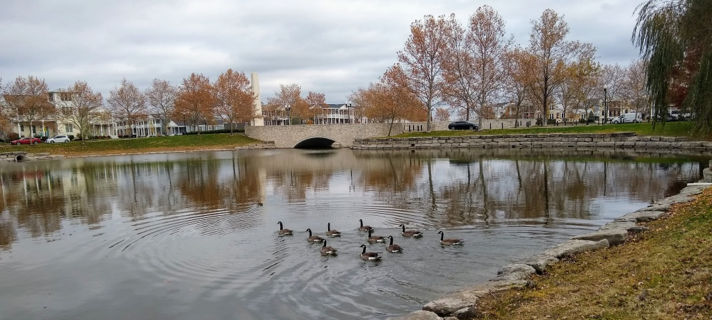 Geese on lake with bridge in background