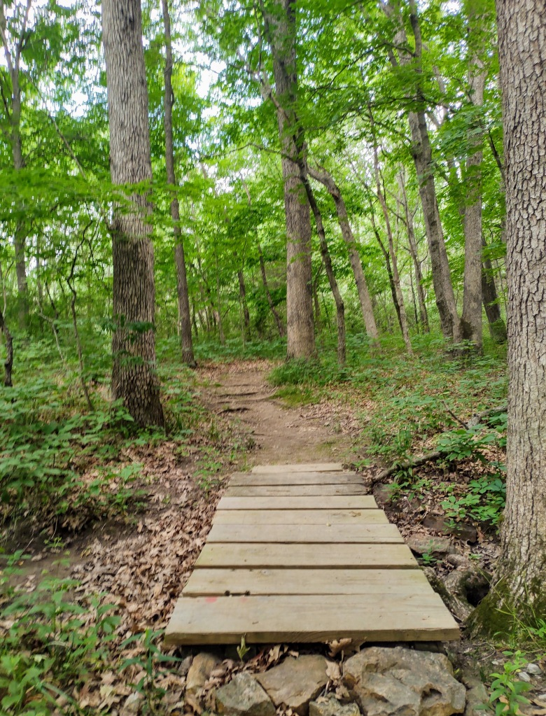 Trail in the woods with a short wooden bridge.