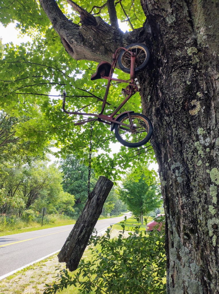 Small bike hanging from a tree at The Wood Shed.
